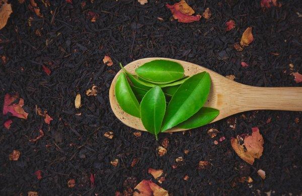 فوائد الشاي الأسود للبشرة